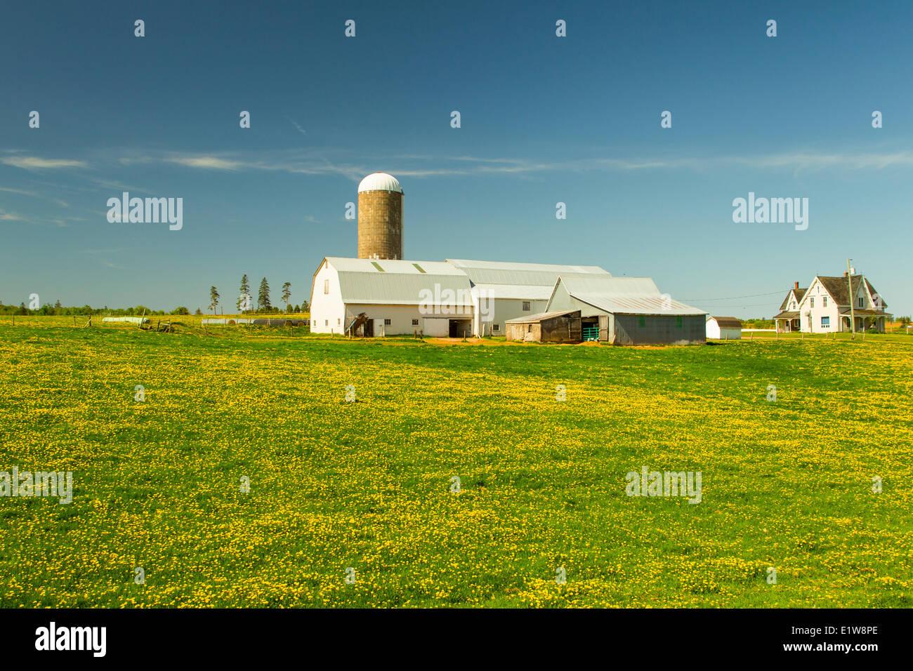 Farm, Springfield, Prince Edward Island, Canada - Stock Image