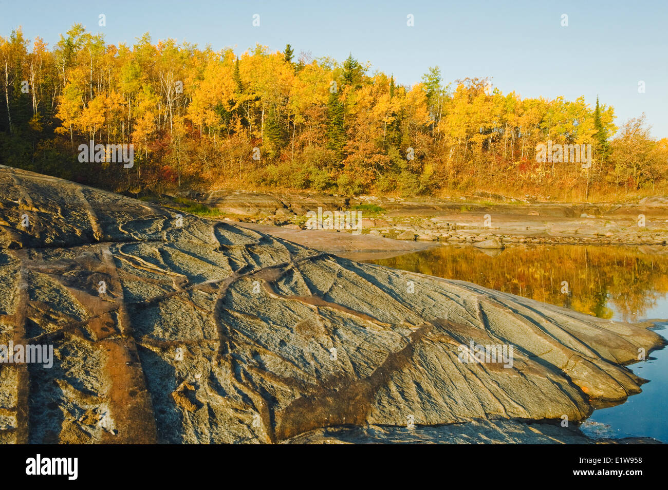 Precambrian shield rock along the Winnipeg River with autumn colors in the background, near Seven Sisters, Manitoba, - Stock Image