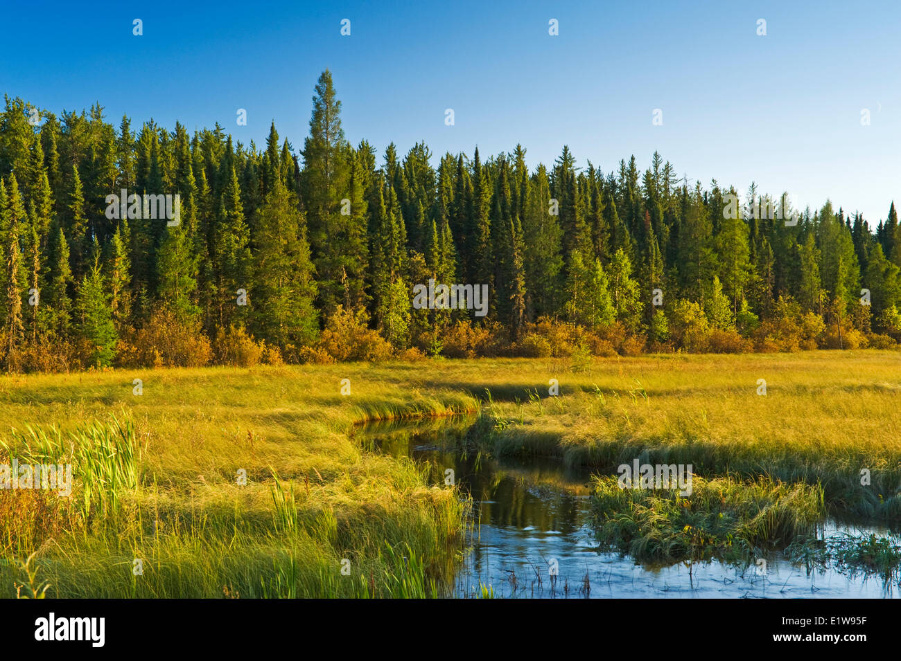Boreal forest near Beauval, Northern Saskatchewan, Canada - Stock Image