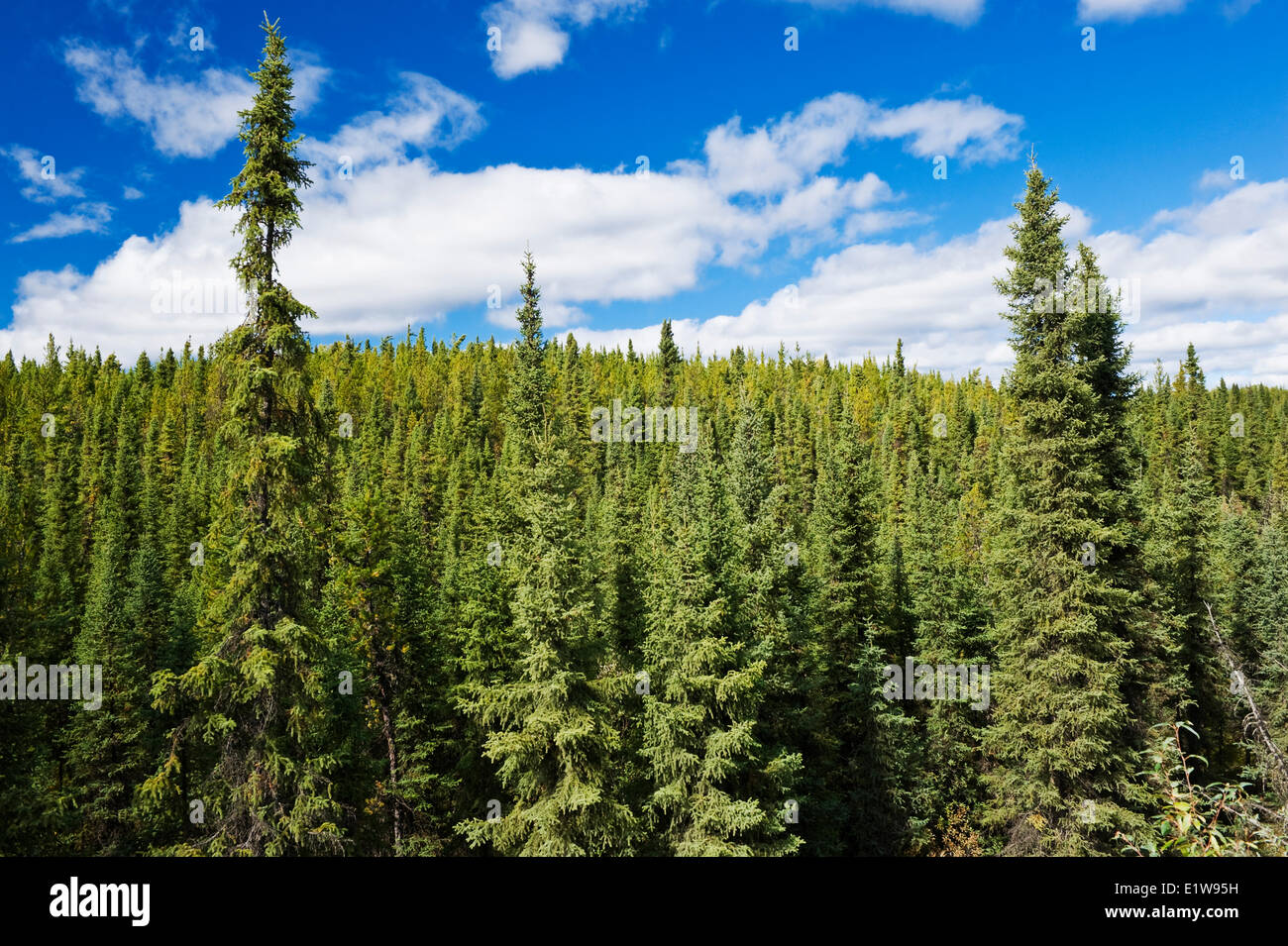 Forest, north of La Ronge, Saskatchewan, Canada - Stock Image