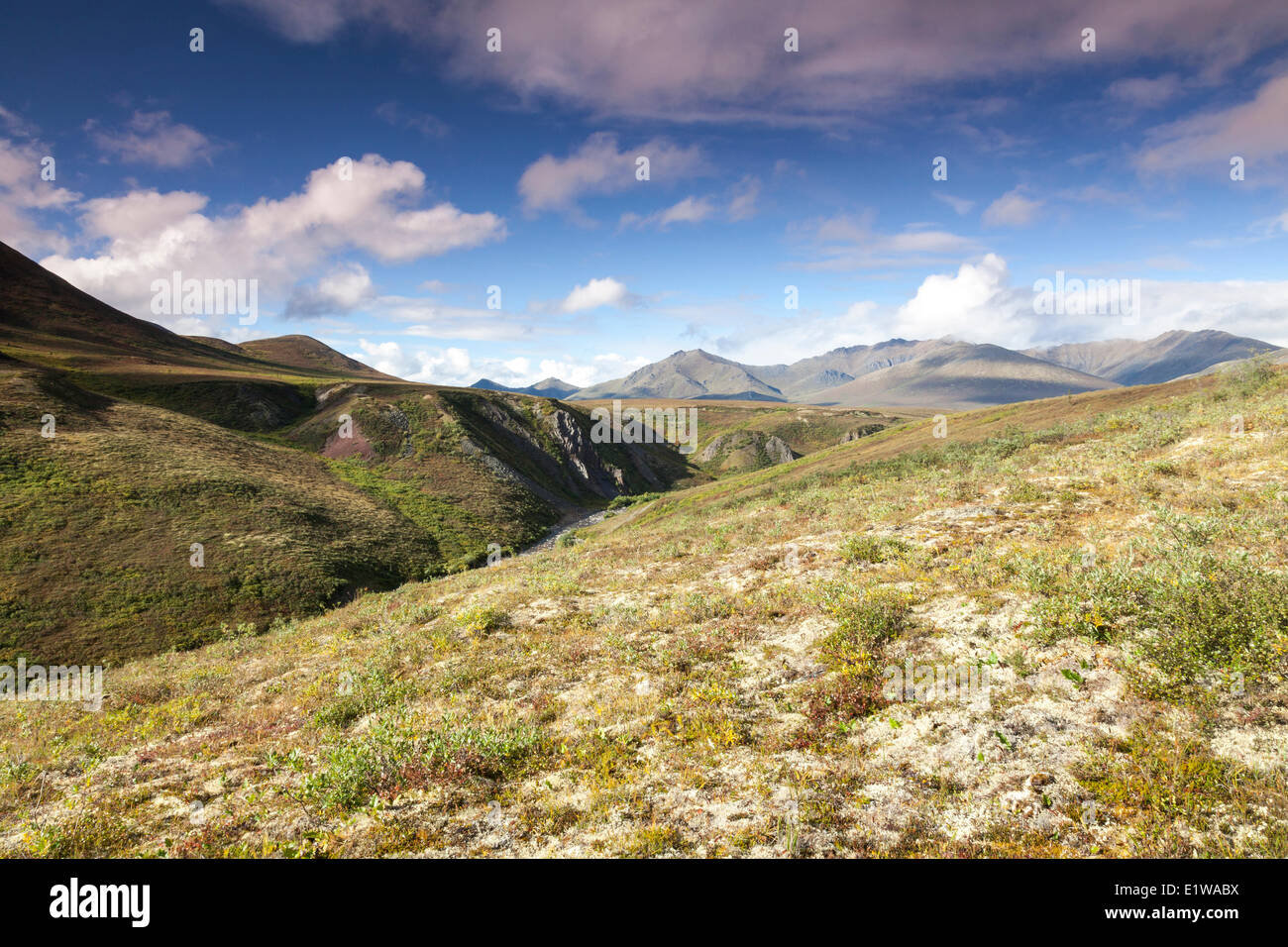 The Taiga Valley in the Yukon Territory as seen from the Dempster Highway, Canada - Stock Image