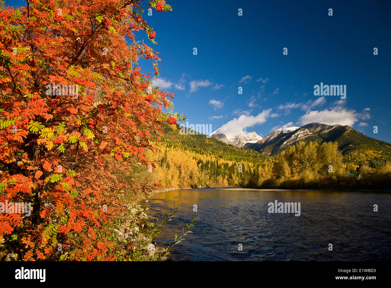 Elk River and Three Sisters in autumn, Fernie, BC, Canada. - Stock Image