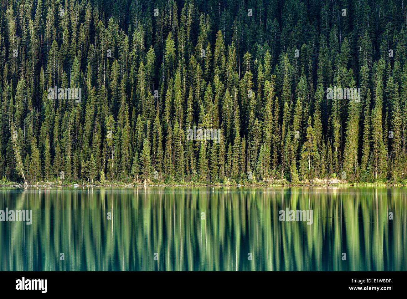 Evergreen trees reflection, Lake Louise, Banff National Park, Alberta, Canada - Stock Image