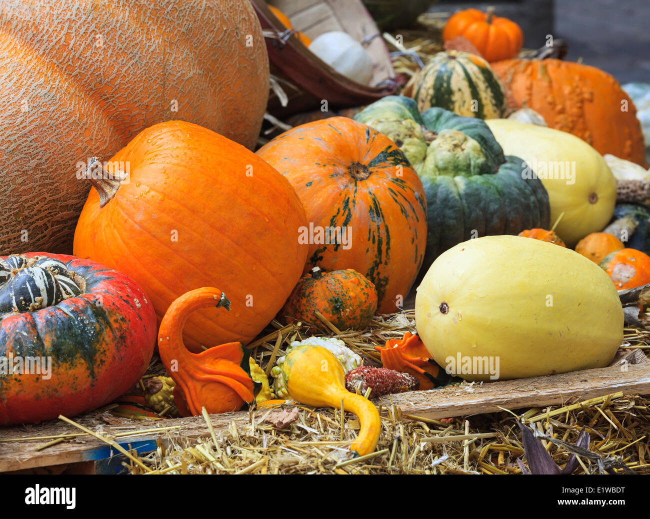 Thanksgiving display of fall harvest, pumpkins, squash and gourds, Mont Tremblant, Quebec, Canada - Stock Image