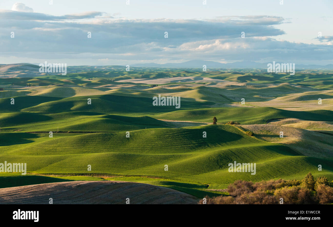 Oakesdale, Palouse, Southeastern Washington, United States of America - Stock Image