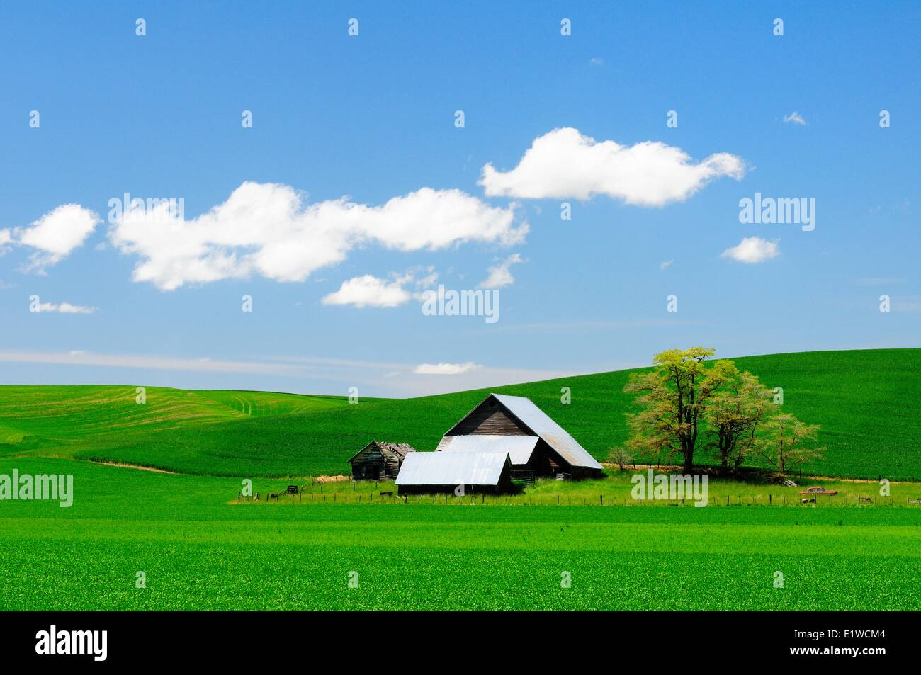 An old barn and farmland in the Palouse region of Washington State, USA. - Stock Image
