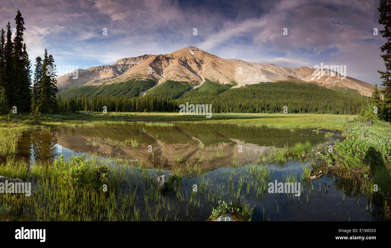 Observation Peak reflected in wetlands in Banff National Park, Alberta, Canada (digitally spliced panorama) - Stock Image