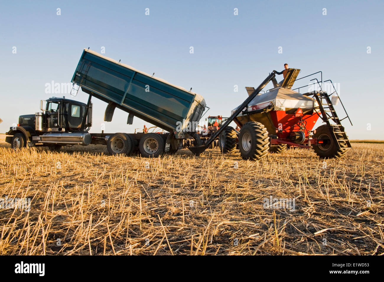 young farmer loading a seeding tank with winter wheat seed and fertilizer, near Lorette, Manitoba, Canada - Stock Image