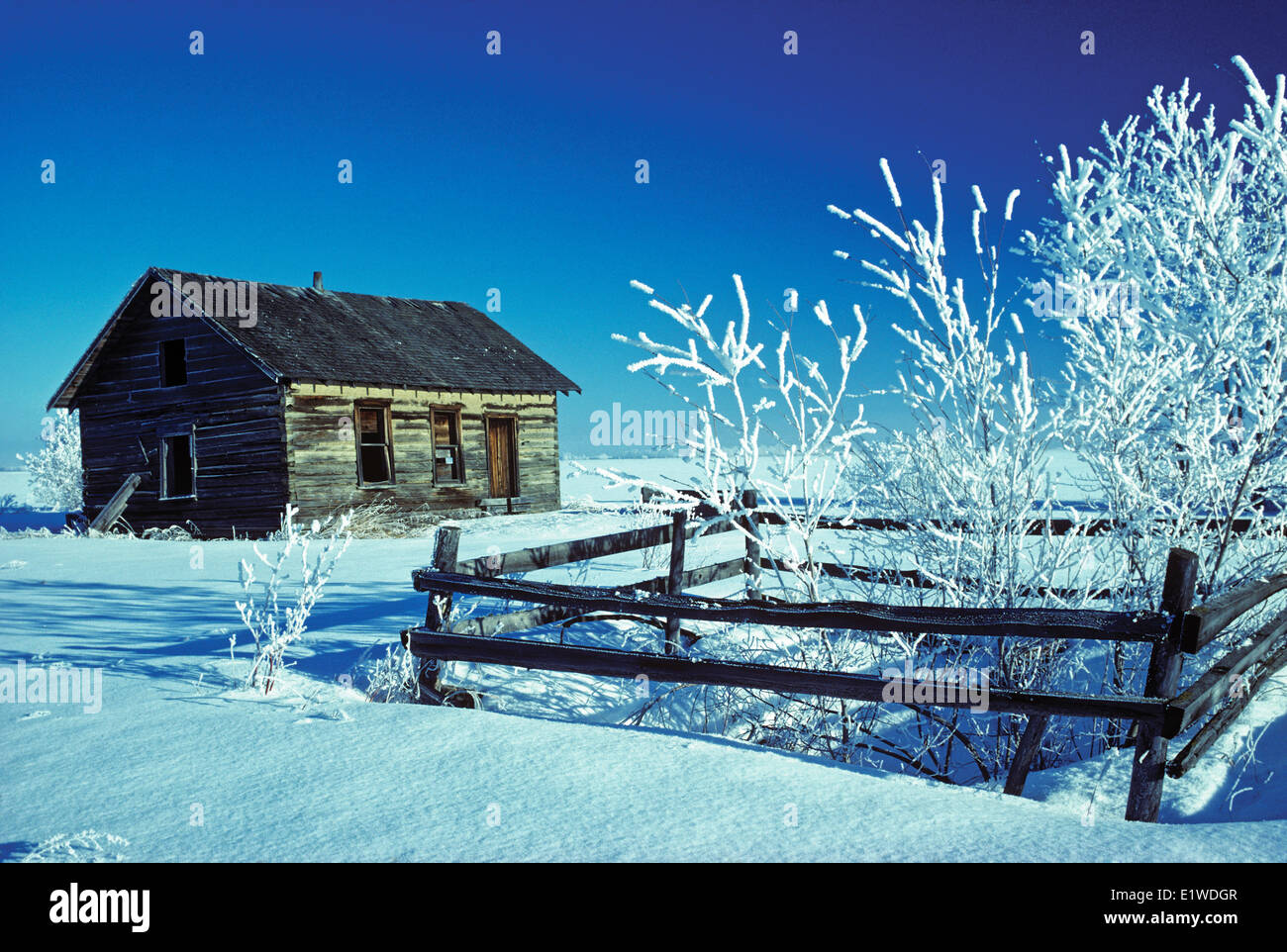 pioneer log home and trees covered with hoarfrost, near Rycroft, Alberta, Canada - Stock Image
