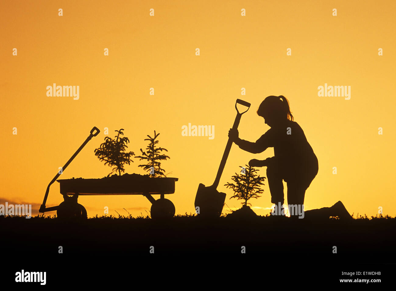 a girl holding a shovel, examines a spruce tree she has just planted, Winnipeg, Manitoba, Canada - Stock Image