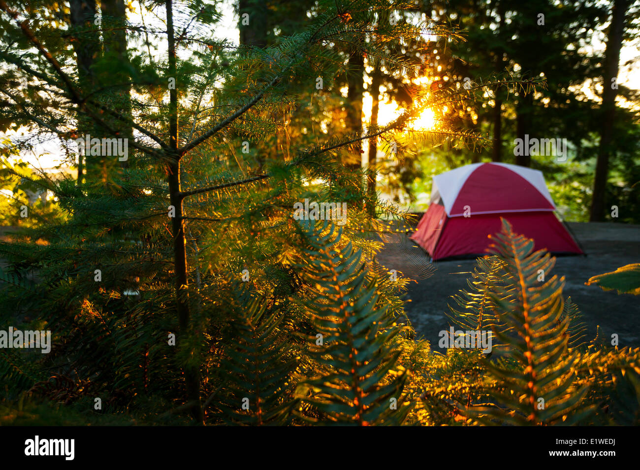 A tentsite is bathed in early morning light at the Zuiderzee Campground Resort just outside Nanaimo.  Nanaimo Vancouver - Stock Image