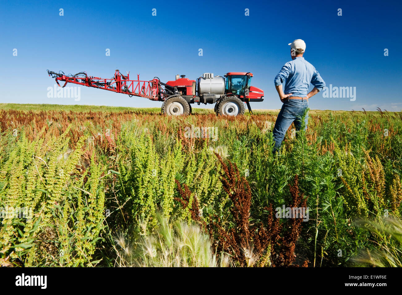 a man looks out over weeds in a field next to a high clearance sprayer, near Moreland, Saskatchewan, Canada - Stock Image