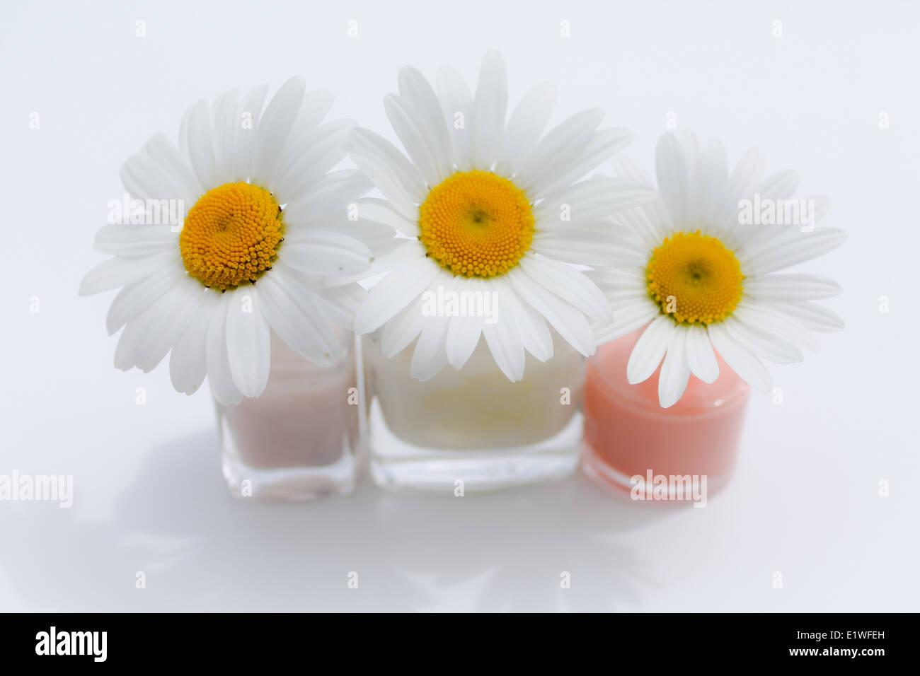 three white daisies in nail varnish pots - Stock Image