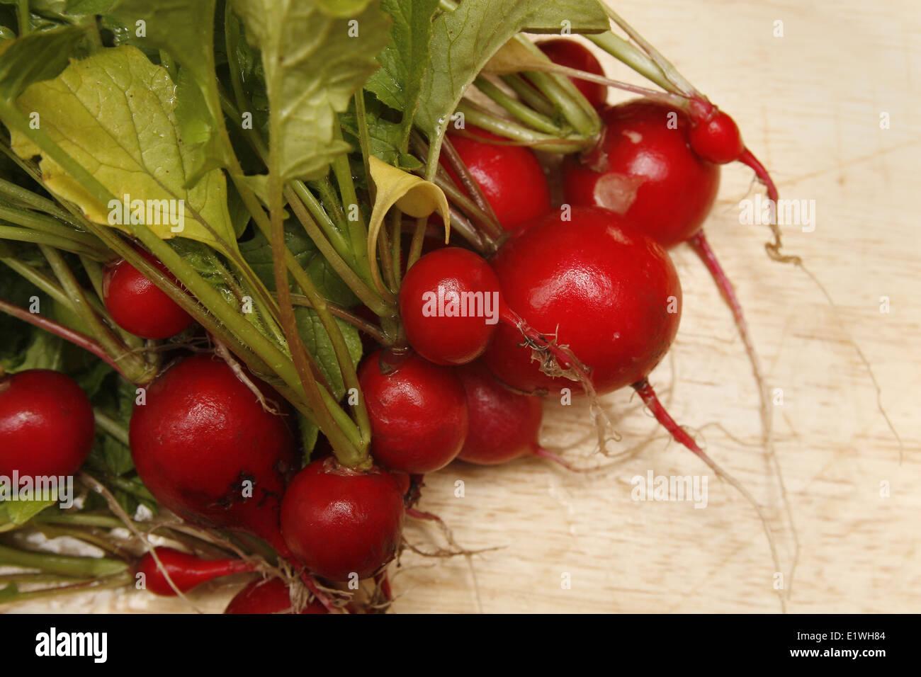 "radish ""scarlet globe"" on chopping board Raphanus sativus Stock Photo"