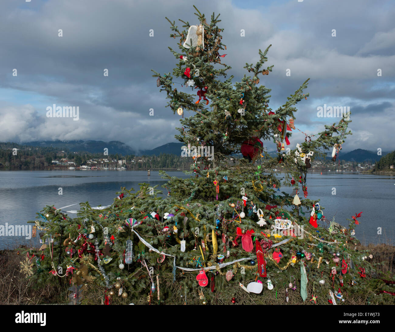 Columbia Christmas Tree: Evergreen Decorated Stock Photos & Evergreen Decorated