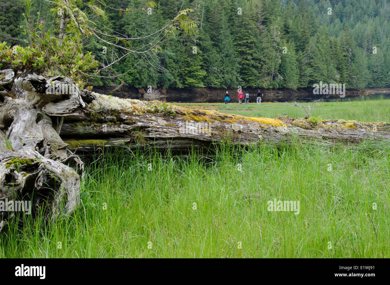 Guests wander shoreline at Nimmo Bay Wilderness Resort, British Columbia, Canada - Stock Image