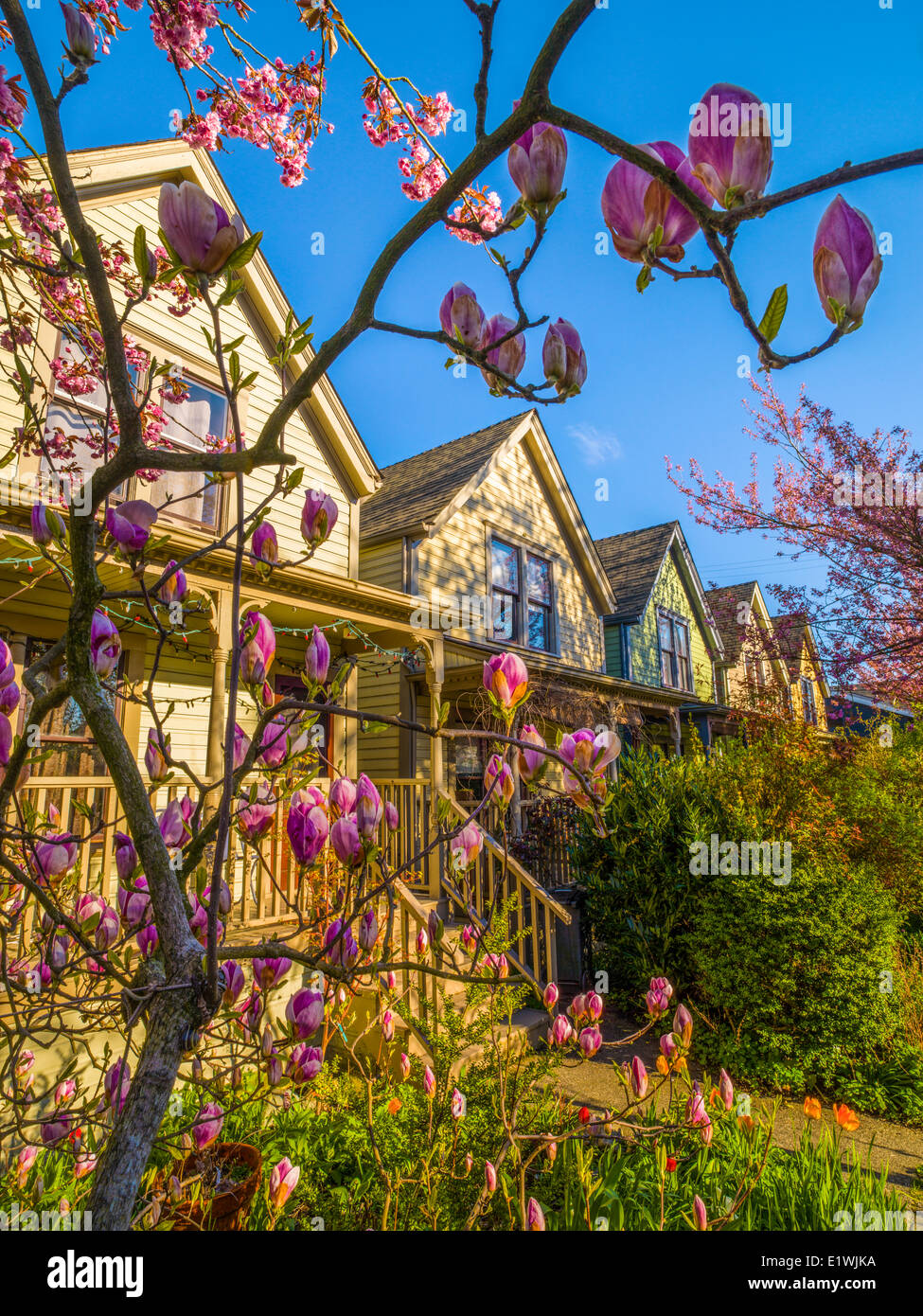 Magnolia Garden Vertical Nobody Stock Photos & Magnolia Garden ...