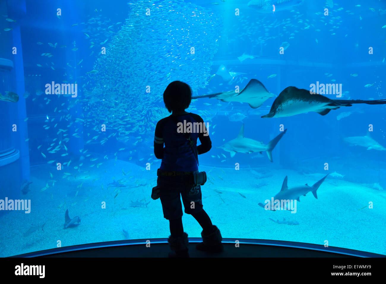 Teenager gazing as sea life in front of the 9-meter deep tank at Osaka Aquarium Kaiyukan. One of the largest public - Stock Image