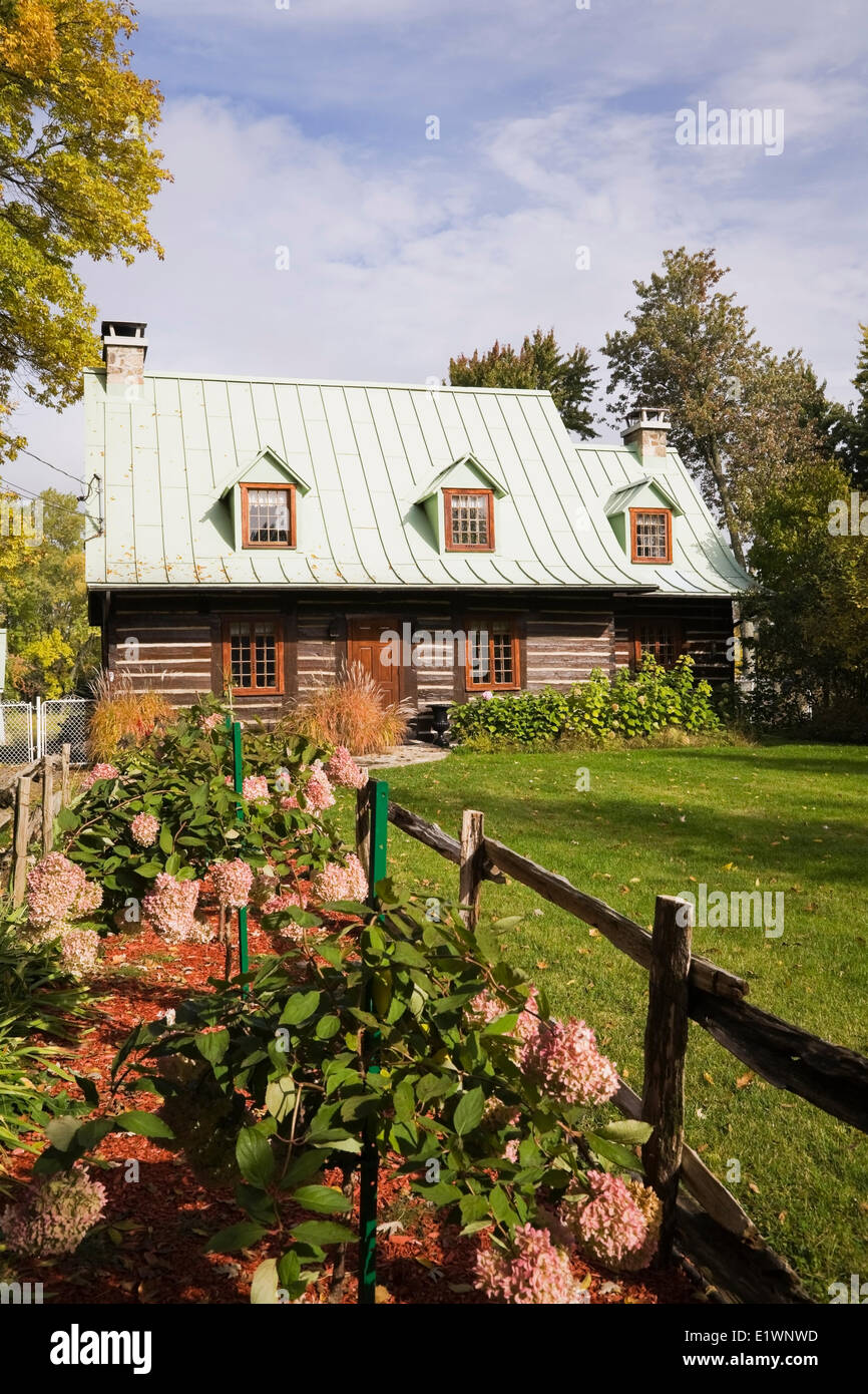 2574d94f46bf Residential log home with pink hydrangea flowers in the front yard in  autumn Quebec Canada. This image is property released.