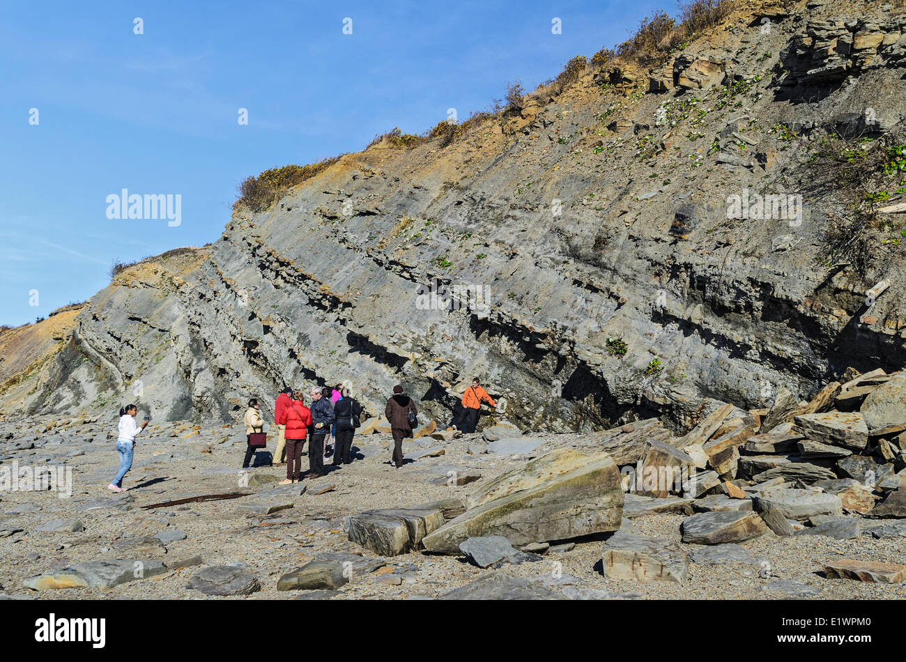 Tourists hunt for fossils from the Coal Age's carboniferous forests that are uncovered in the Joggins Fossil - Stock Image