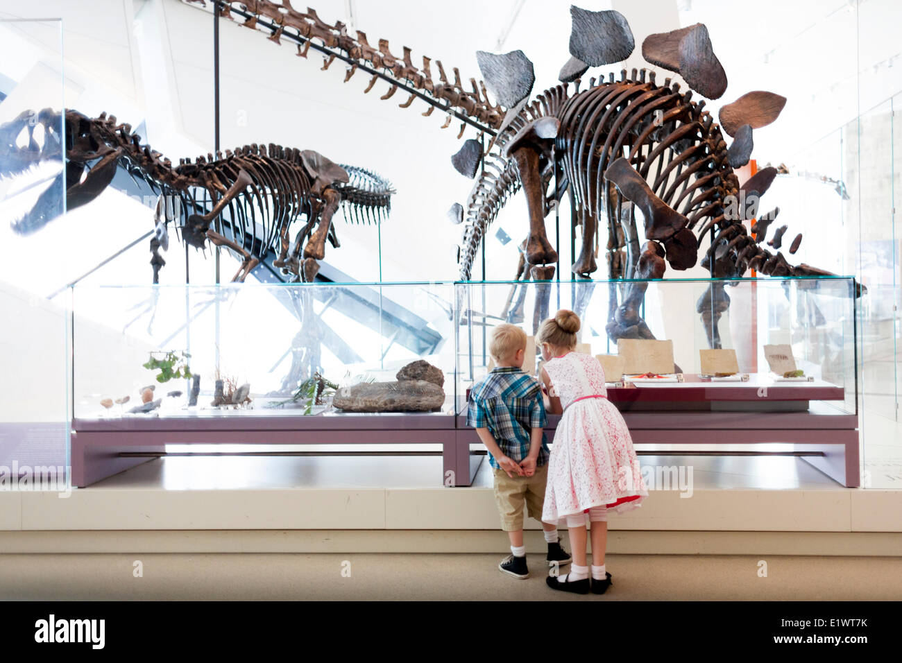 Girl and boy looking at dinosaur fossils at Royal Ontario Museum, Toronto, Ontario, Canada - Stock Image