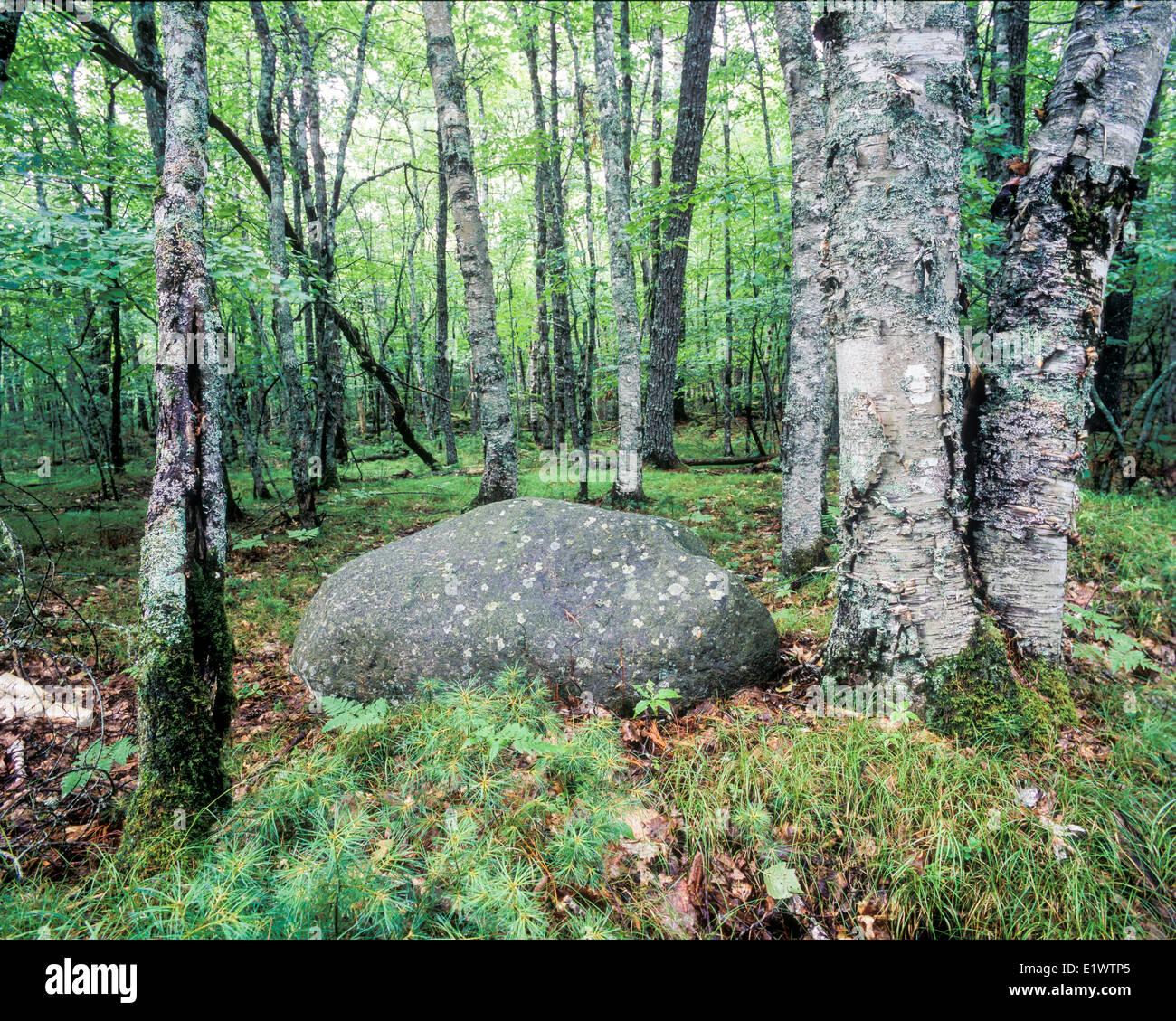 Erratic rock and trees in Kejimkujik National Park, Nova Scotia Stock Photo