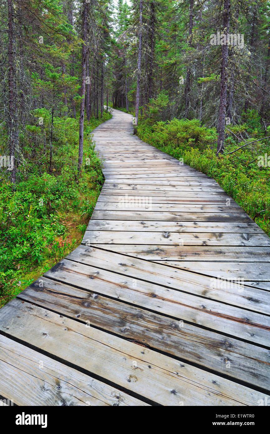 Boardwalk on the Spruce Bog Trail, Algonquin Provincial Park, Ontario, Canada - Stock Image