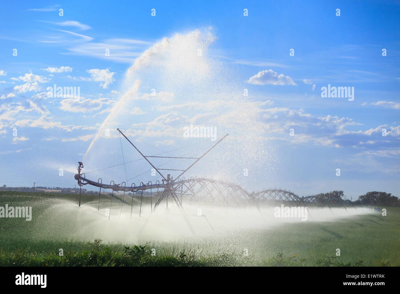 Center pivot water irrigation, near Lethbridge, Alberta, Canada - Stock Image