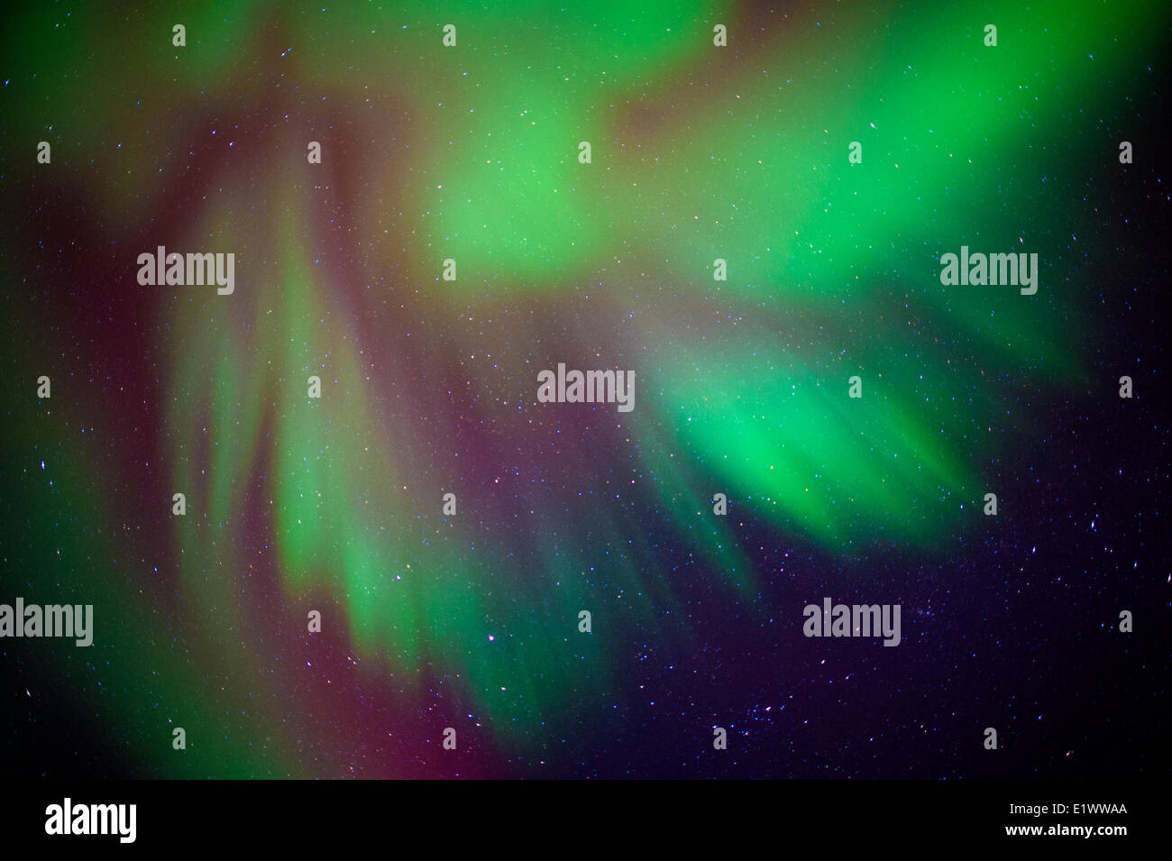 Aurora borealis (northern lights), boreal forest, Yellowknife environs, NWT, Canada - Stock Image
