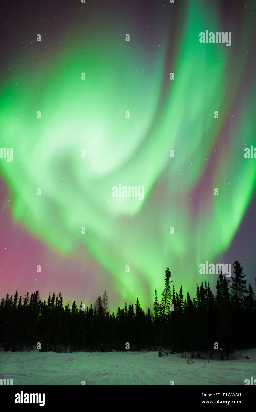 Aurora borealis (northern lights), boreal forest, Yellowknife environs, NWT, Canada Stock Photo