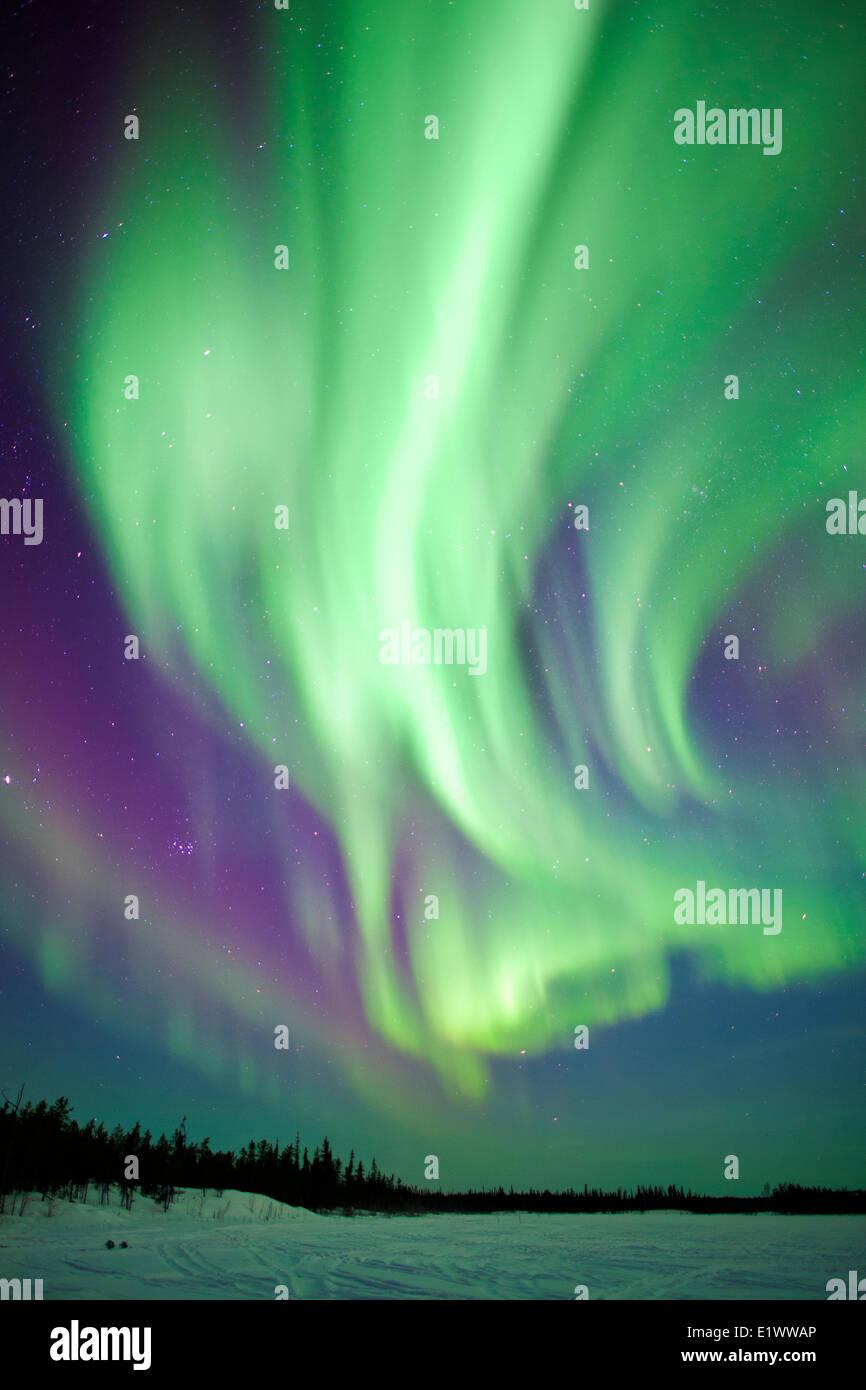 Aurora borealis (northern lights), boreal forest, Yellowknife environs, NWT, Canada Stock Photo