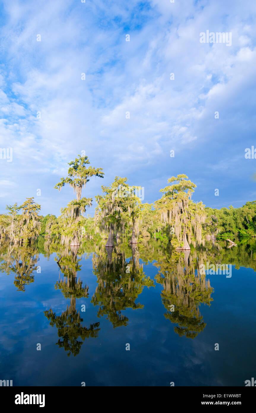 Cypress swamp, Achafalaya River Basin, southern Louisiana, USA - Stock Image