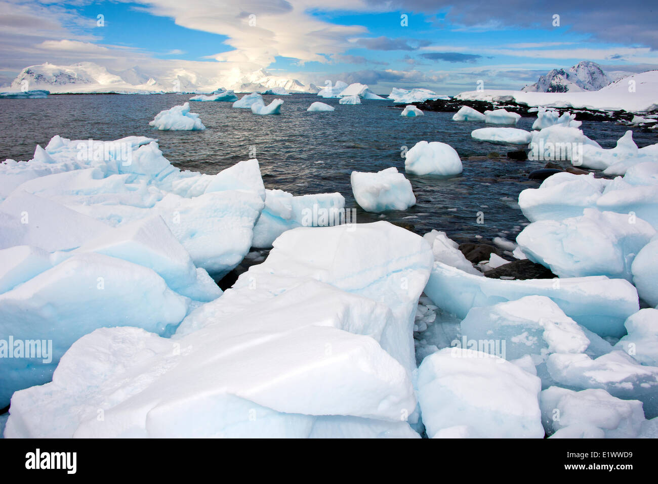 Orne Islands, Antarctic Peninsula - Stock Image