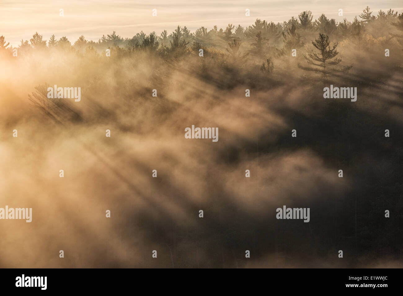 The rising sun shines through the mist lifting from the depths of the Barron Canyon in Algonquin Park, Ontario - Stock Image