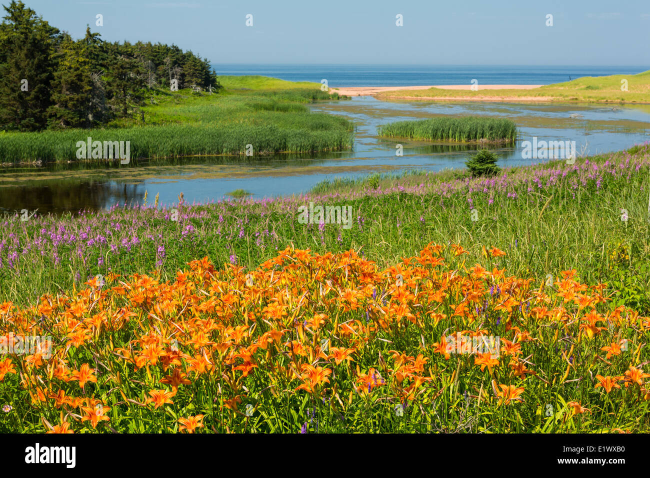 Priest Pond, Prince Edward Island, Canada - Stock Image
