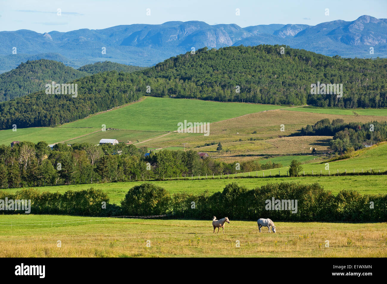 Two horses in one several pastures hay fields against a background mountains in the Charlevoix backcountry Quebec - Stock Image