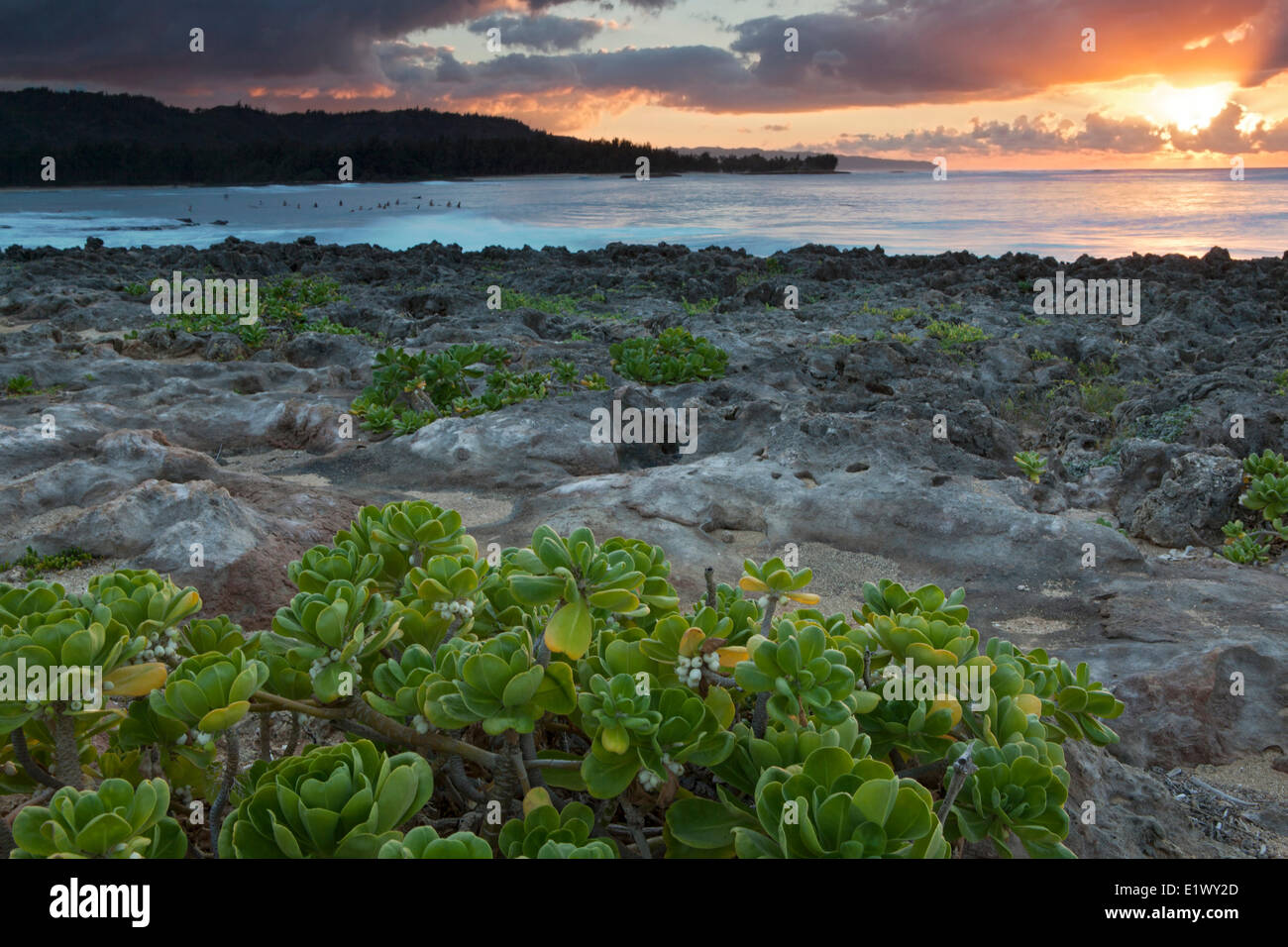 Sunset at Turtle Bay, Oahu, Hawai'i, United States of America - Stock Image