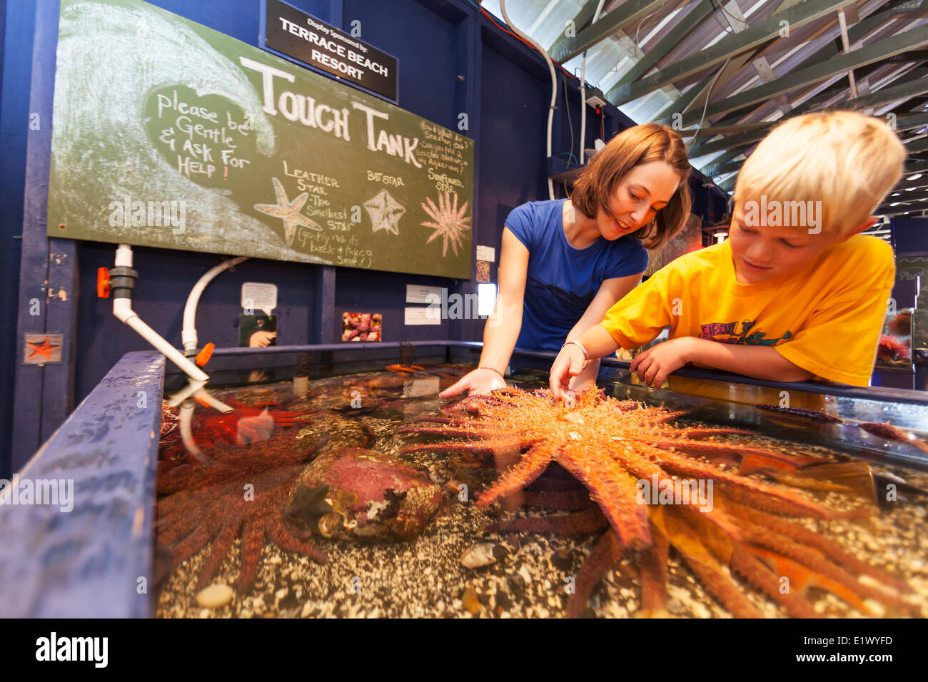 A young boy a volunteer at the Ucluelet Aquarium explore a touch tank it's inhabitants including a Sunflower - Stock Image