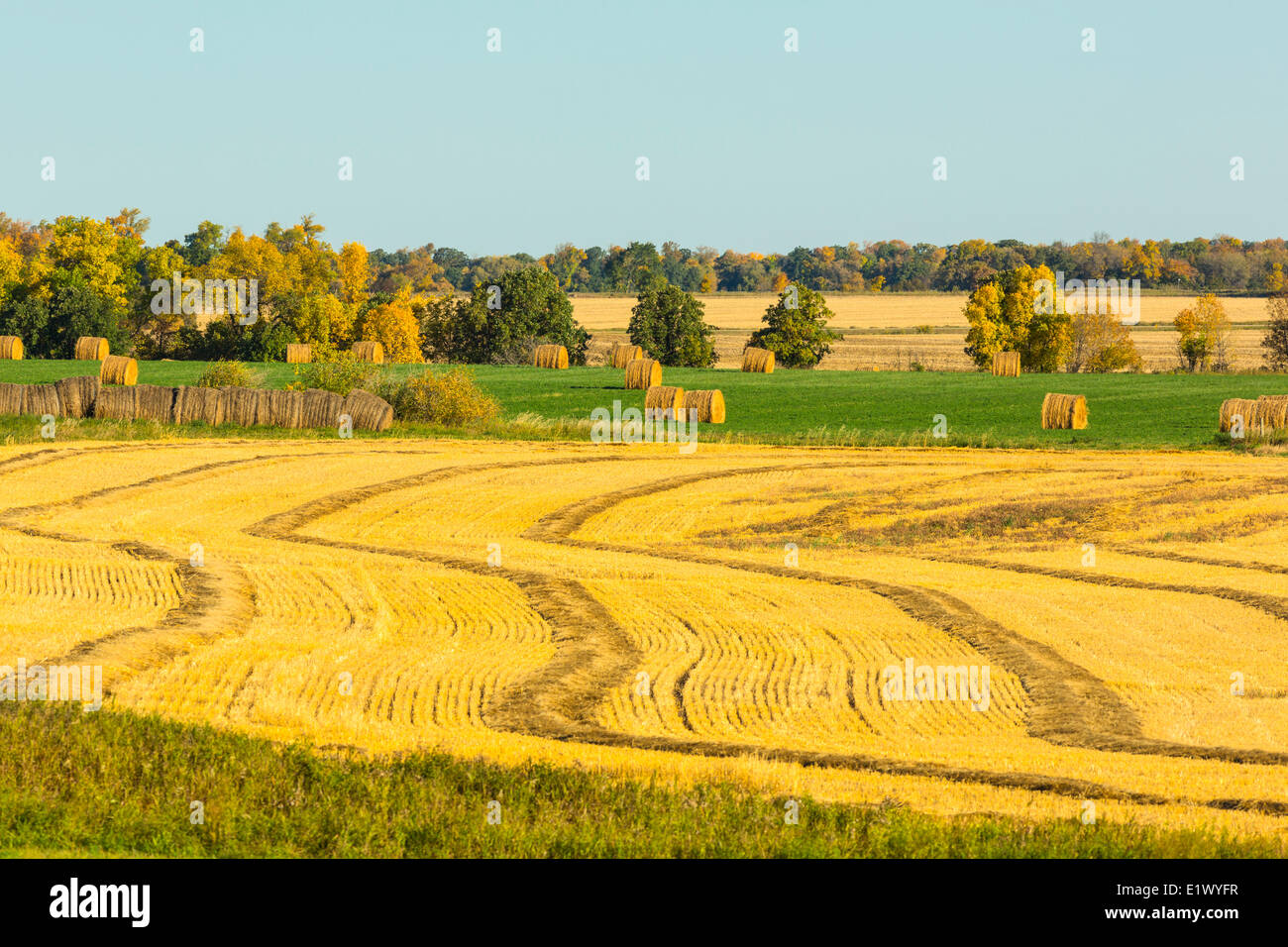 Baled hay and cut wheatfield, Thompson, Manitoba, Canada - Stock Image