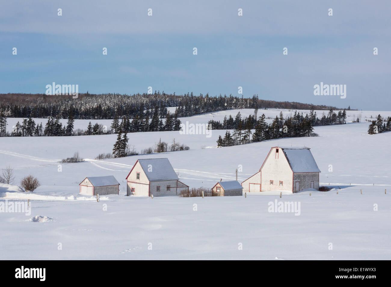 Barns in winter, Irishtown, Prince Edward Island, Canada - Stock Image