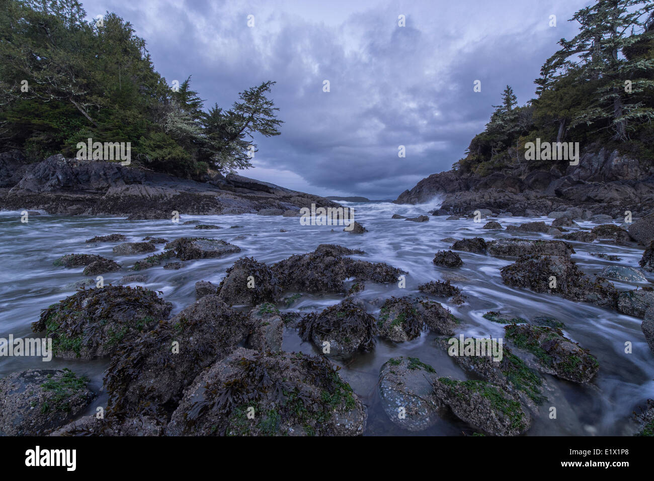 Dawn breaks over Crystal Cove, Tofino as the tide rises to cover the rocks. Vancouver Isalnd, British Columbia, - Stock Image