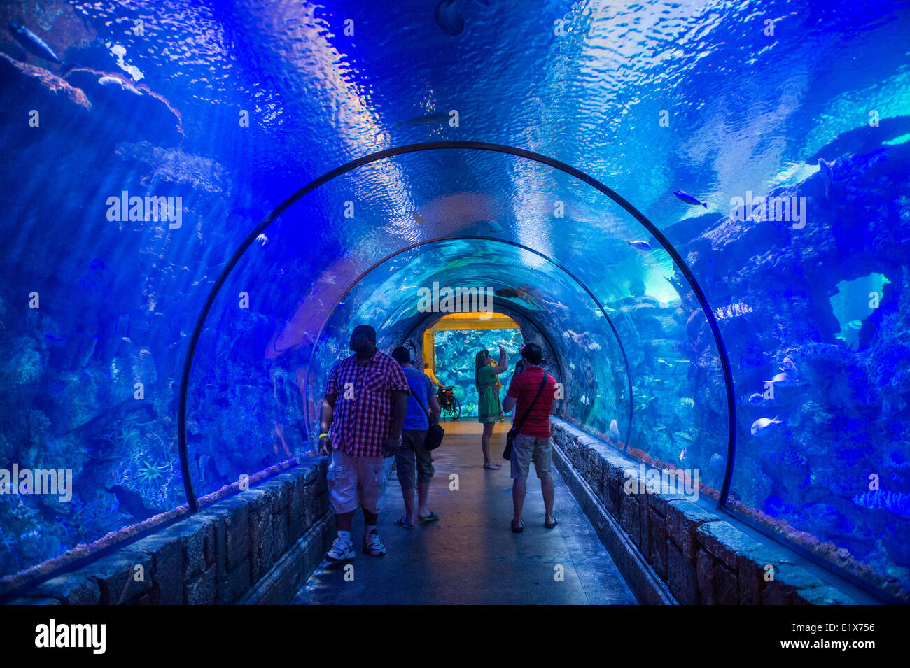 las vegas casino with aquarium