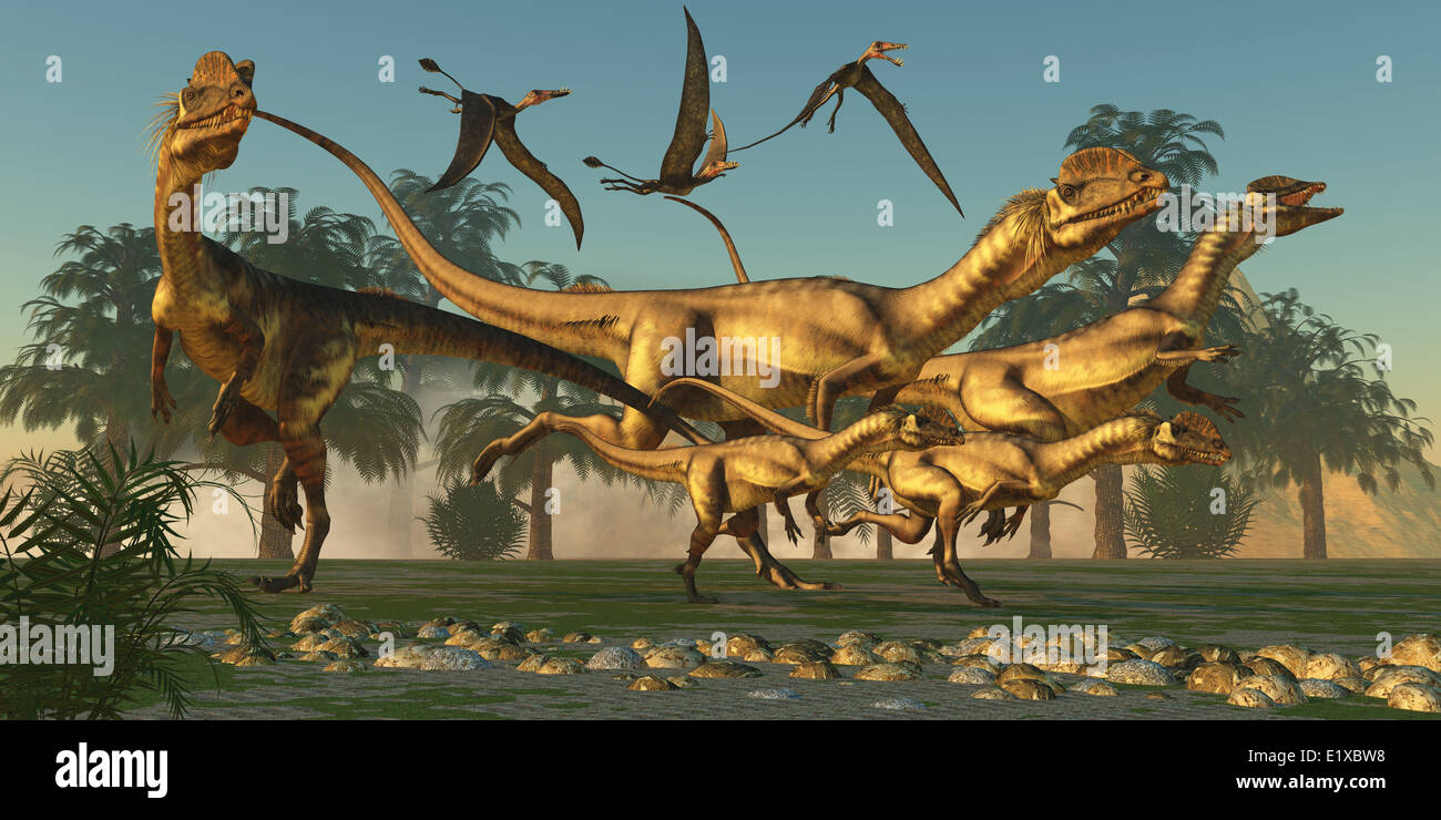 A pack of Dilophosaurus are beginning their hunt for prey as flying Dorygnathus pterosaurs follow along. - Stock Image