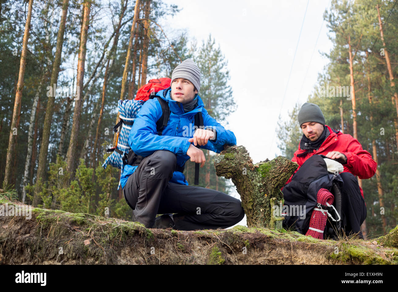 Male hikers in forest - Stock Image