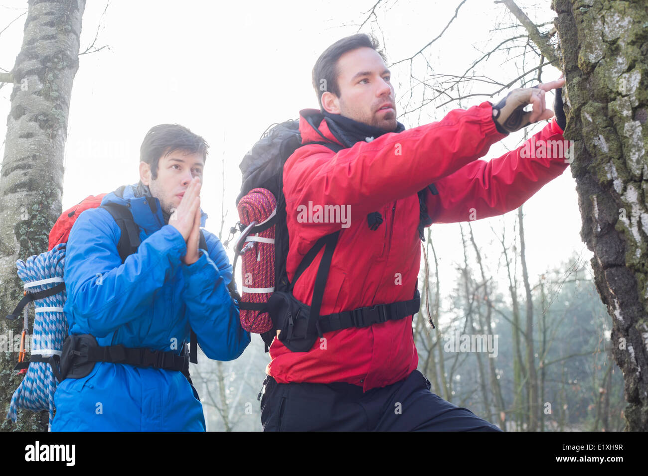 Male hikers exploring tree trunk in forest - Stock Image