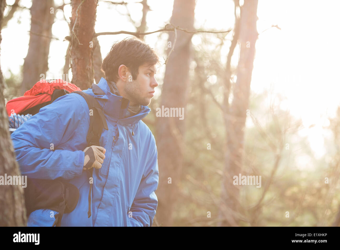 Make hiker carrying backpack in forest - Stock Image