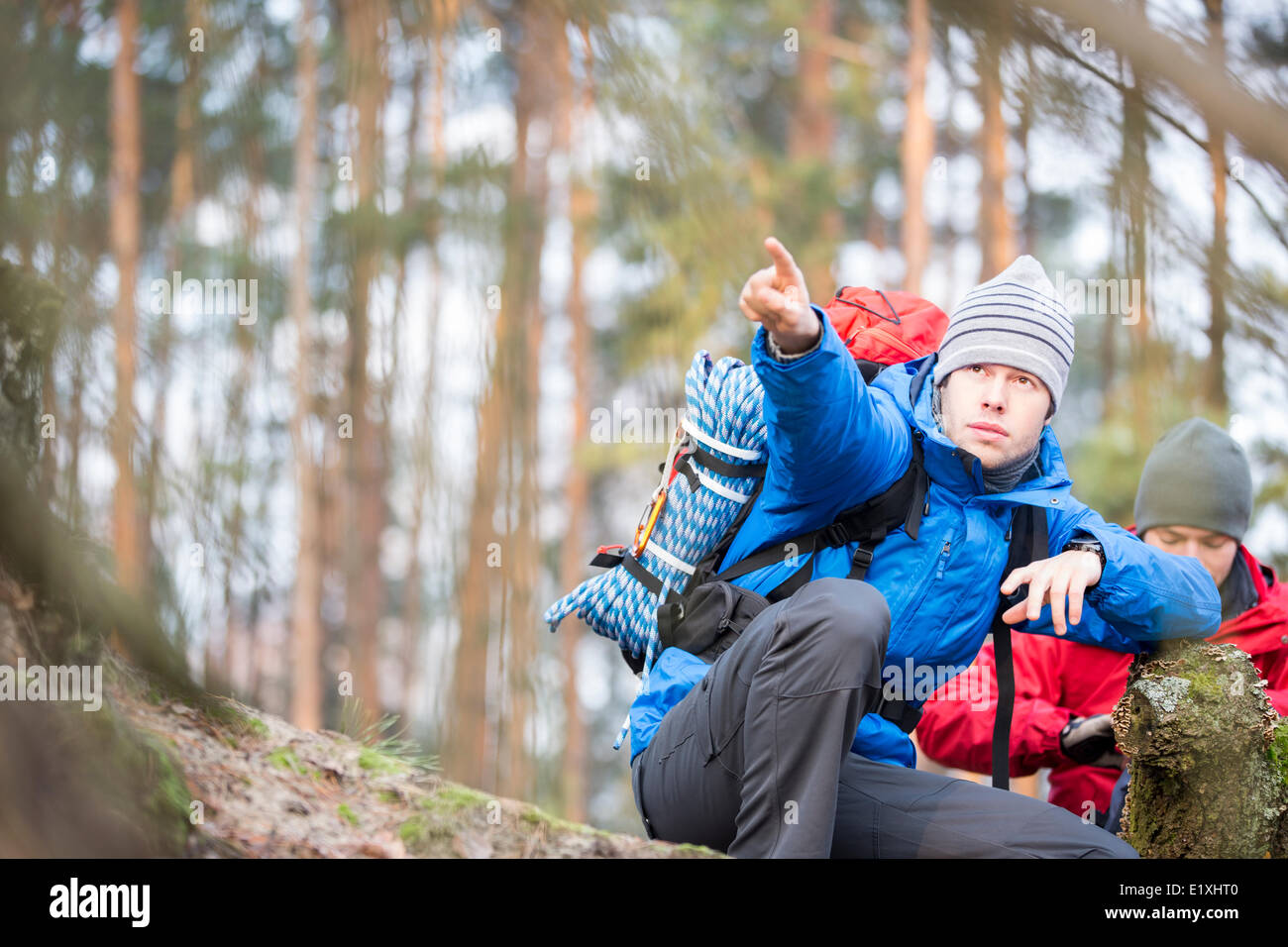 Male hiker pointing in forest - Stock Image