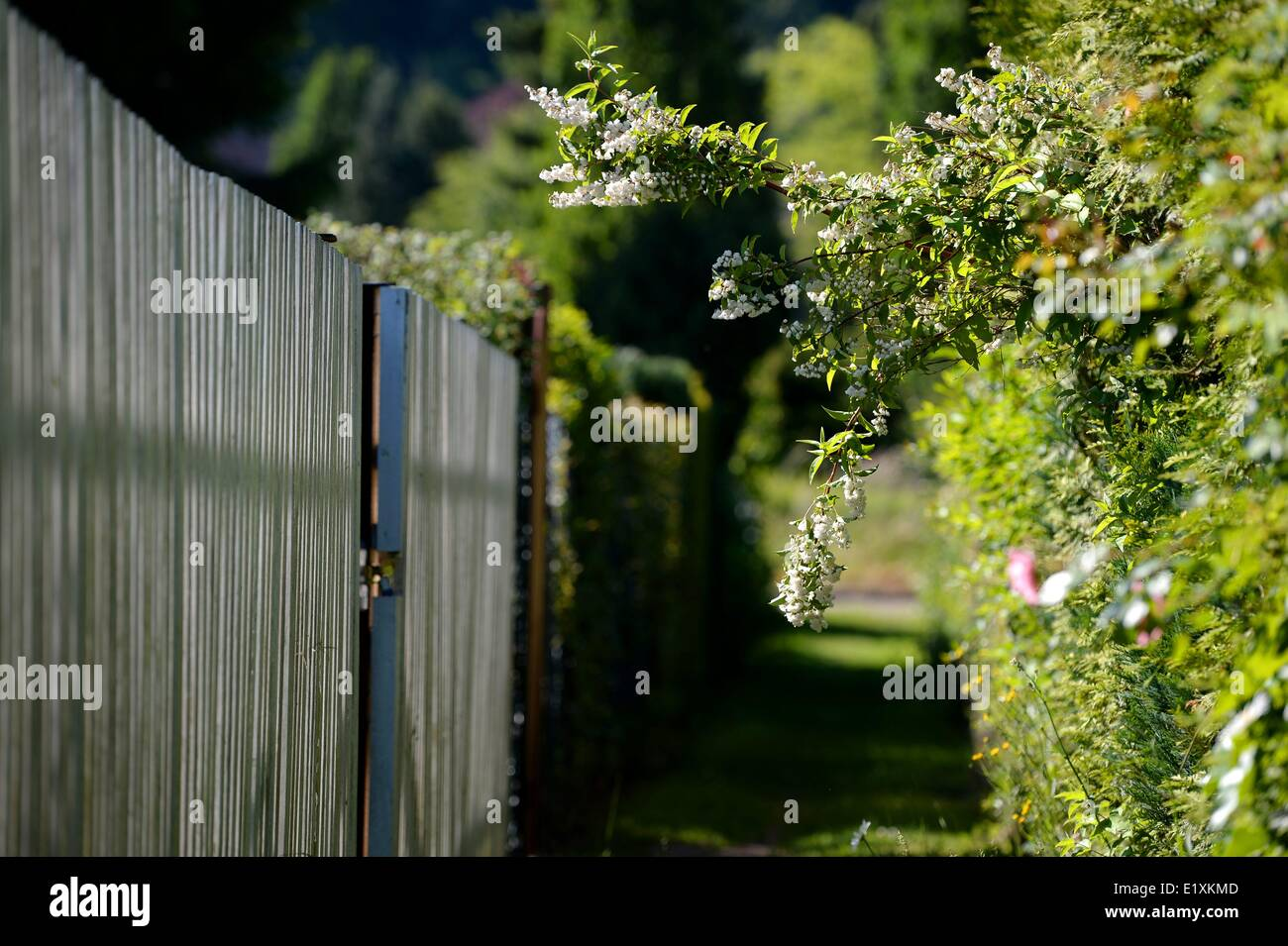A walkway along of fences in a garden in germany, 06. June 2014. Photo: Frank May Stock Photo