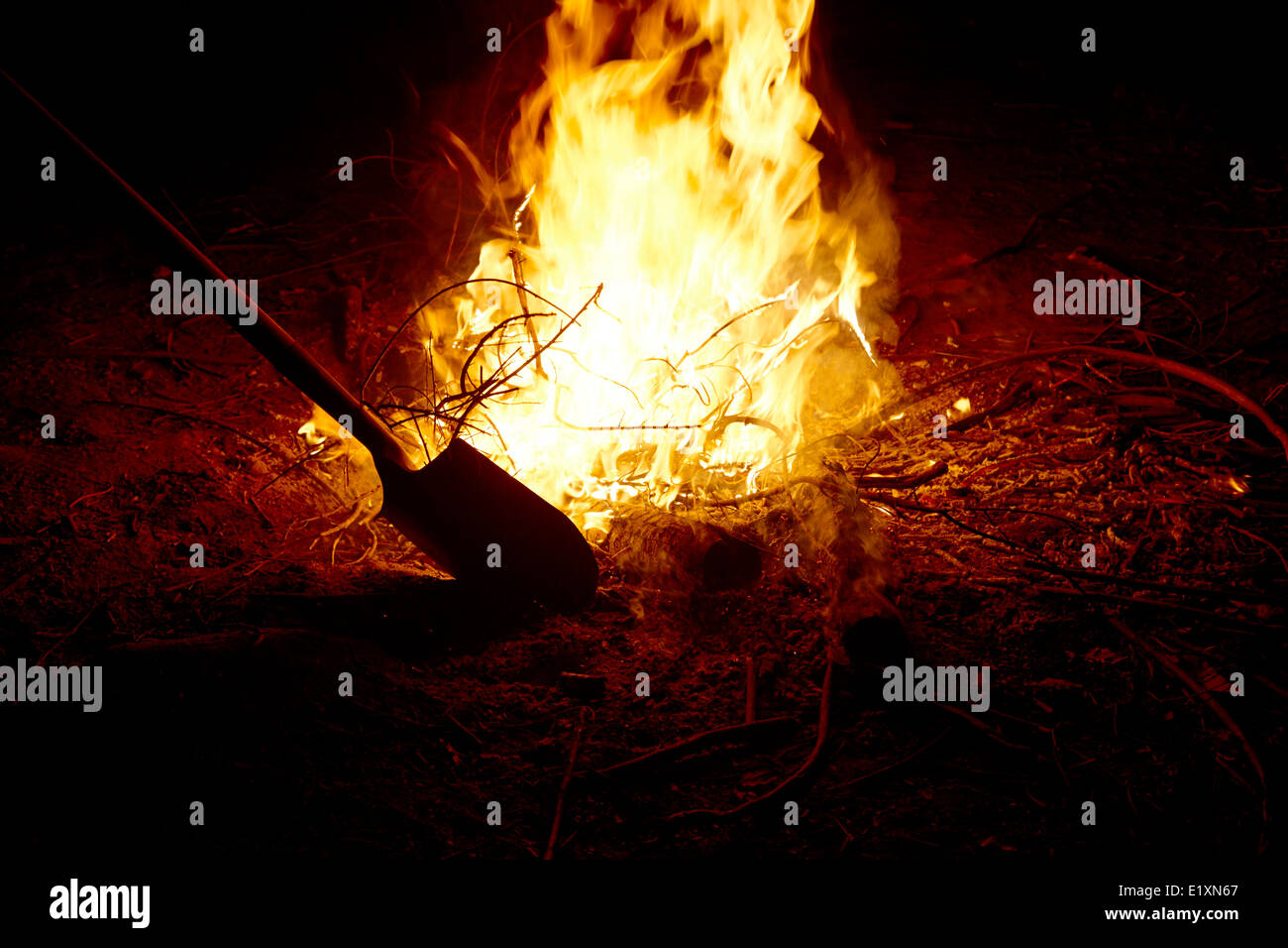 putting out with shovel a burning eucalyptus wood in an intense camp fire los pellines chile - Stock Image
