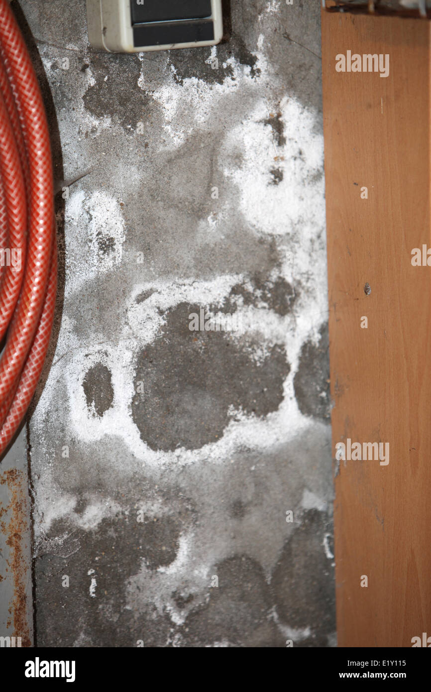 Moldy, damp basement walls - Stock Image